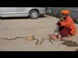 Амит - Кобра,чыланнар...:) #Индия #Бодхгаяа #13012017