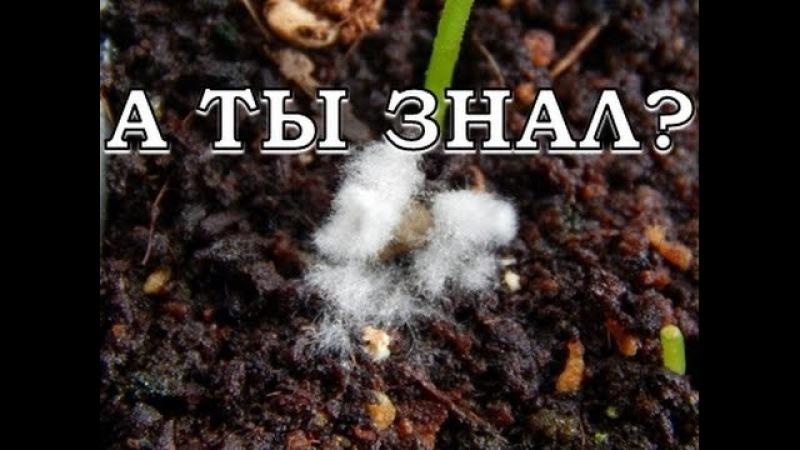 Плесень на грунте с рассадой - почему, что делать, меры профилактики
