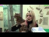 Выставка кошек ПФЦ