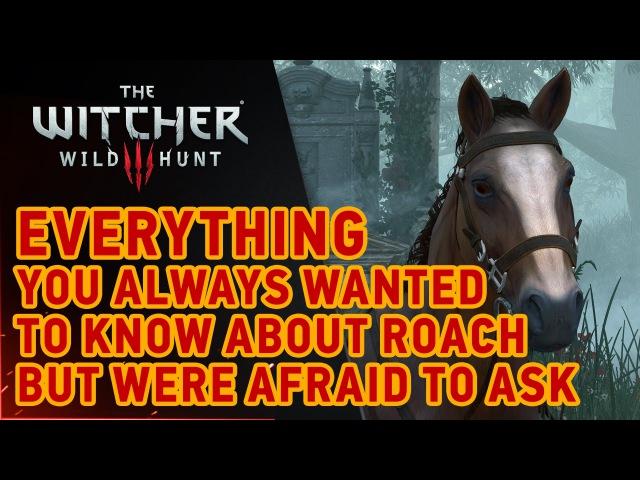 The Witcher 3 Wild Hunt Roach