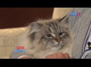 Кот Путина обрёл хозяина プーチン露大統領の猫が秋田県に到着 Putin's gift cat finally meets Japanese owner
