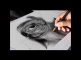 Drawing Pencil   Hyperrealism   Silvia Pagano Art