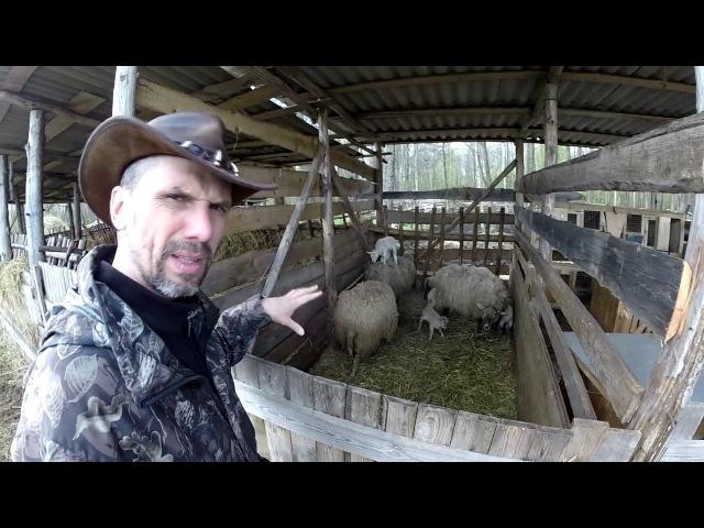 Обычная сельская жизнь Как отрезать рог барану Как принять роды у овцы Бык покрывает корову