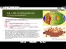 Hücre 4 Tek Zarlı Organeller (Golgi - Lizozom - Koful) - 9. Sınıf Biyoloji Konu Anlatımı
