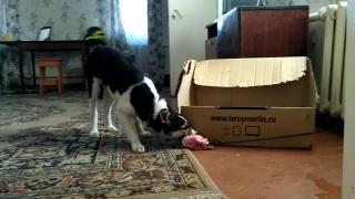 как отучить собаку таскать еду по комнате