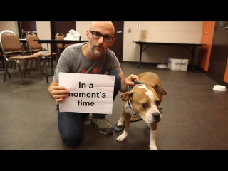Moby - Almost Home (Best Friends Animal Society Lyric Video)
