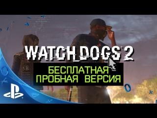 Watch Dogs 2   Бесплатная пробная версия на PS4