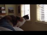 Прыгающие котейки