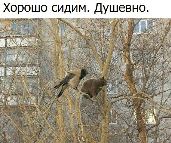 Реформы в Украине двигаются в правильном направлении, но надо их ускорить, - Миклош - Цензор.НЕТ 157