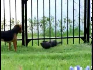 Собака играет с речной выдрой (by Eric)