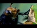 Странные связи муха высокое качество