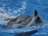SUPER Dolphin Show Batumi | Slow Dance -