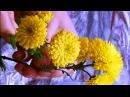 Хризантема из холодного фарфора полимерной глины легко мастер класс Часть 2 Chrysanthemum of cold