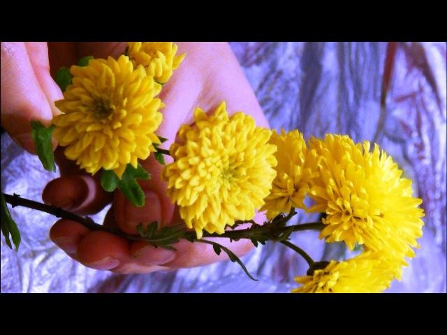 Хризантема из холодного фарфора полимерной глины легко, мастер класс Часть 2 Chrysanthemum of cold