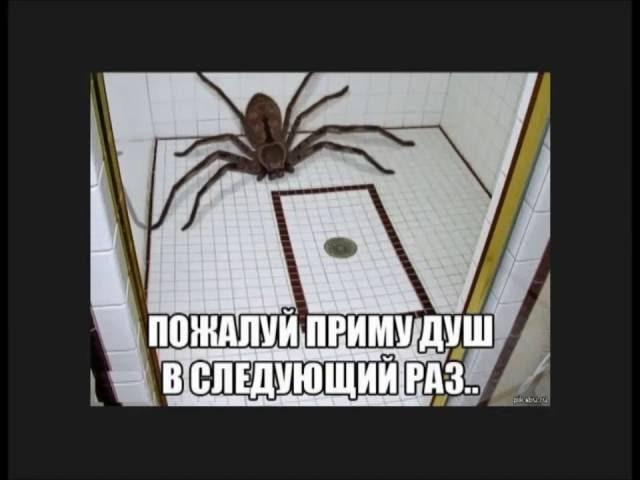 Короче говоря паук В честь 56 подписчиков
