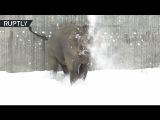 Слон, белый медведь и тюлени играют в снегу