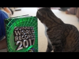 Most tricks by a cat in one minute - Meet the Record Breakers-Большинство трюков котом в одну минуту - Встречайте рекордсменов