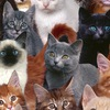 Кошки Тюмени. Дорога домой