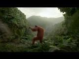 Мы отвесаем как обезьяны в джунглях - Monkey in the jungle