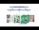 Відео ботаніка Тканини