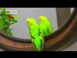 Говорящие и поющие попугаи