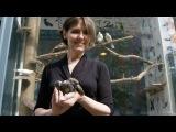 Inside New Yorks Only Bird Rehab Center