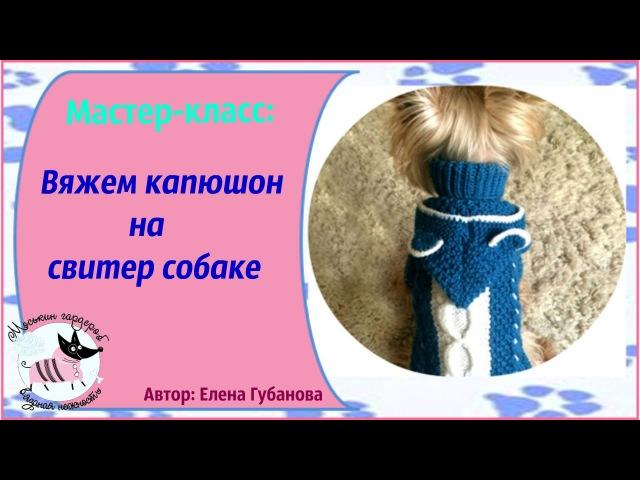 Мастер- класс: Вяжем капюшон на одежду собаке