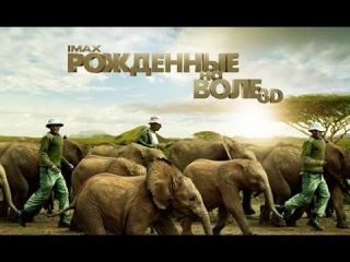 «Рожденные на воле 3D» — фильм IMAX в СИНЕМА ПАРК