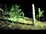 Охота на барсука с лайками. Смертельная схватка
