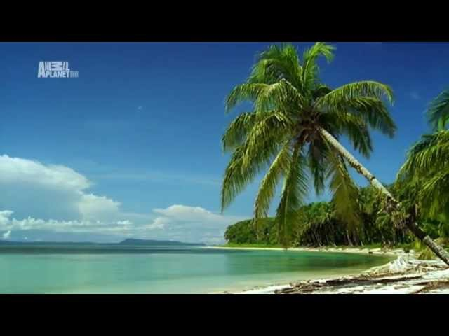 Неизведанные острова - 2 Карибы