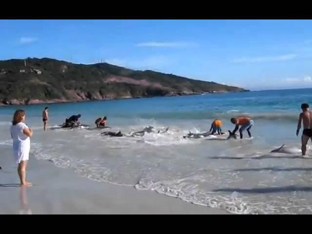 Delfines varados en playa de Brasil