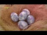 Как необычно покрасить пасхальные яйца. Техника с шёлком. The Decoration of Easter Eggs
