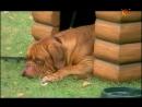 Т С Домик с собачкой 4 серия 2002г