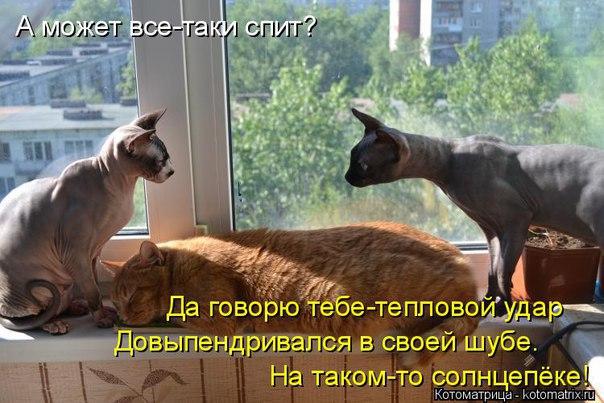https://pp.vk.me/c626623/v626623430/12d9f/YM8helfMwdQ.jpg
