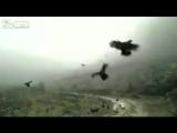 В Сети появилось видео, на котором запечатлено настоящее нашествие птиц. Причем огромное количество пернатых, которые летят отку