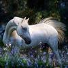 """"""" Как фотографировать лошадь"""""""