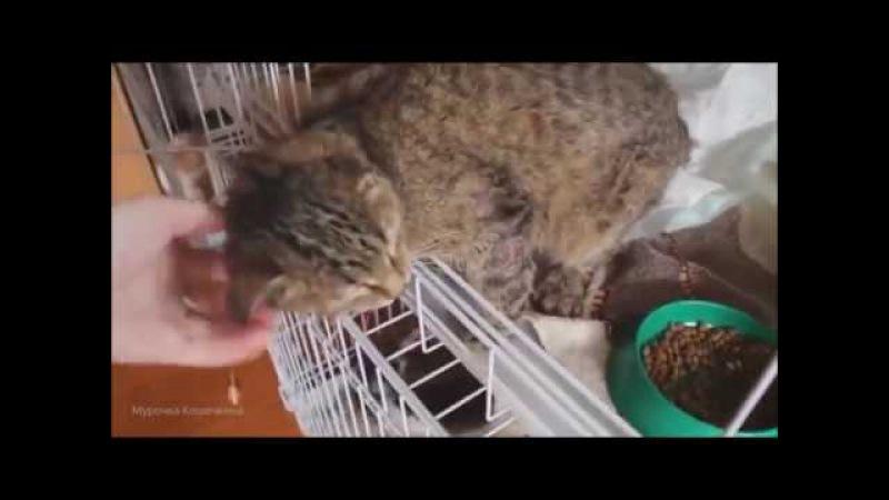 Шокирующее видео из приюта для животных. У этих животных практически нет шансов ...