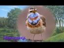 Певчие птицы России