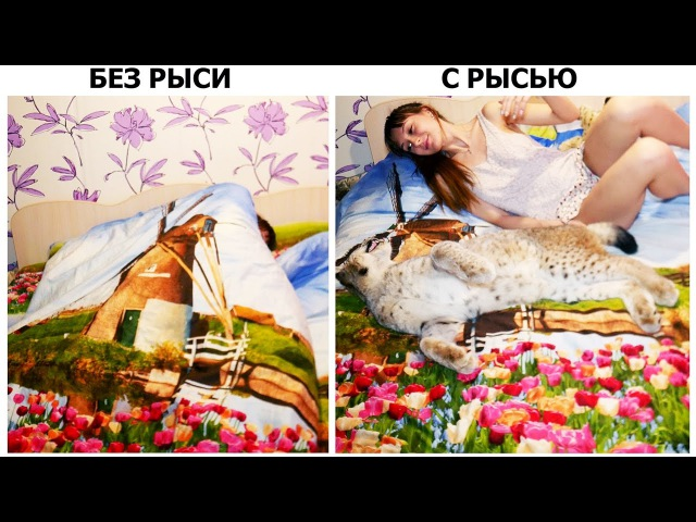 ЖИЗНЬ С РЫСЬЮ И БЕЗ РЫСИ Life with and without a big cat