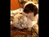 Как правильно делать массаж кошке)