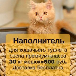приколы про собак и кошек фото