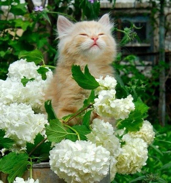 коты и цветы - Страница 2 9h6f_QiKLV8