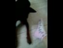 это видео У моей подруги Ани пожалуйста поставьте лайки и собачки очень смешно хахаха