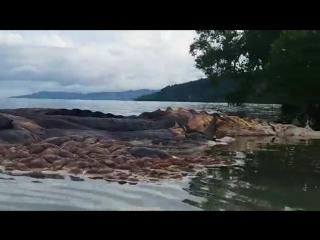 Таинственное существо,прибило к берегам Индонезии.