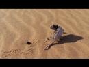 BBC Жизнь - Life (2009) 2. Рептилии и Амфибии
