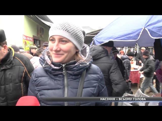 Українці замість нормальної їжі купують насіння, бо дешево