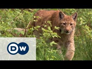 Шварцвальд: дикая природа в сердце Германии