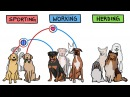 Связан ли характер собак с породой? cdzpfy kb [fhfrnth cj,fr c gjhjljq?