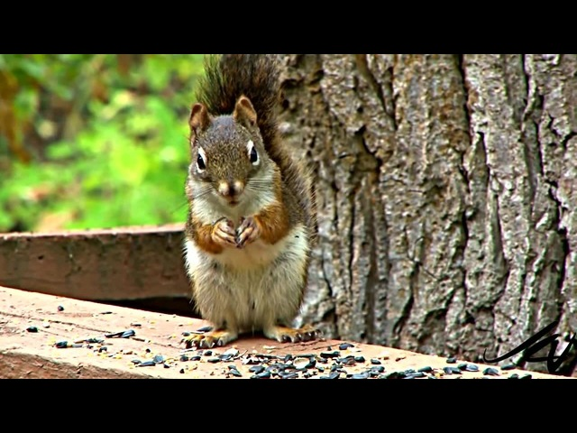 RnB Squirrel)