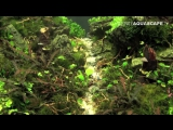 The Art of the Planted Aquarium 2015 - Scapers Tank (Nano) category, part 1